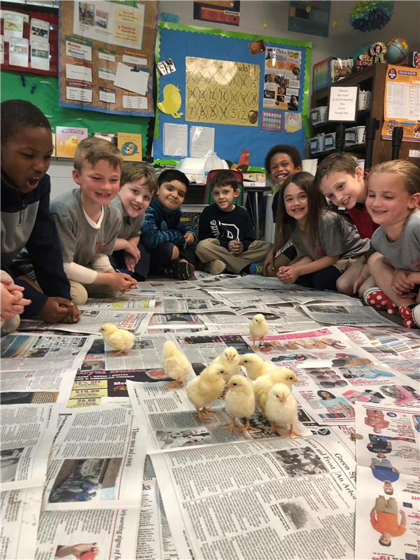 The students in Mrs. Wincovitch's Second Grade Classroom learned about many life cycles in Science. Their favorite was learning about the Chick Life Cycle.
